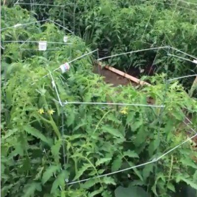 A Video, A Squishy Garden