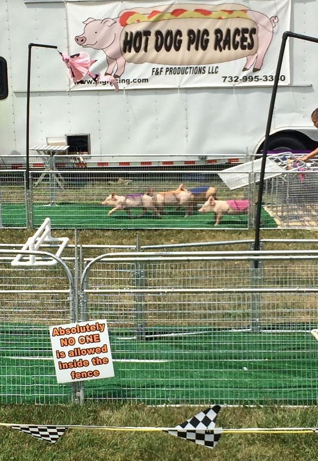 Piglets Racing