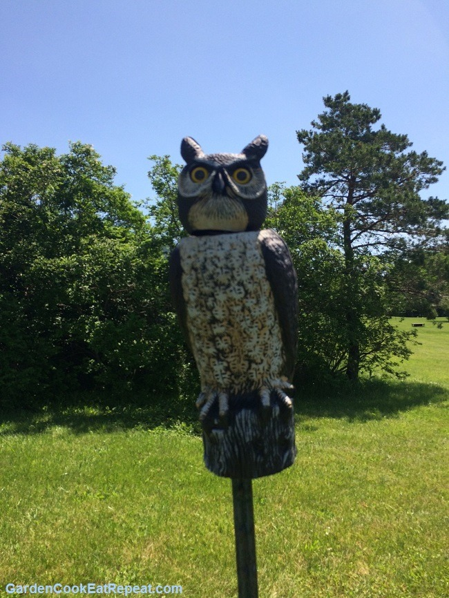 Our Owl Guarding the Garden