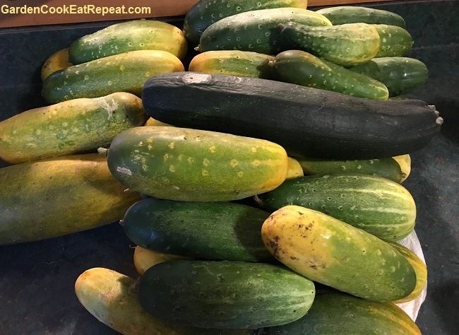 Cucumbers and a zucchini