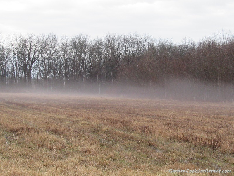 Fog in the field