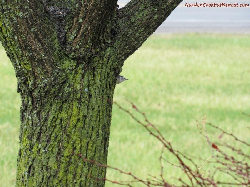 Bird peek a boo