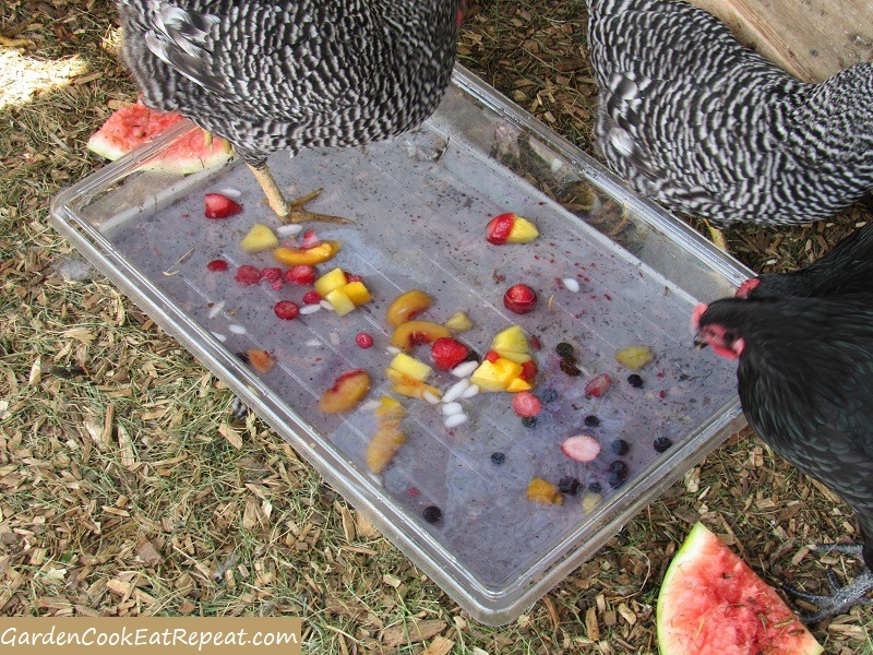 Chicken Wading Pool