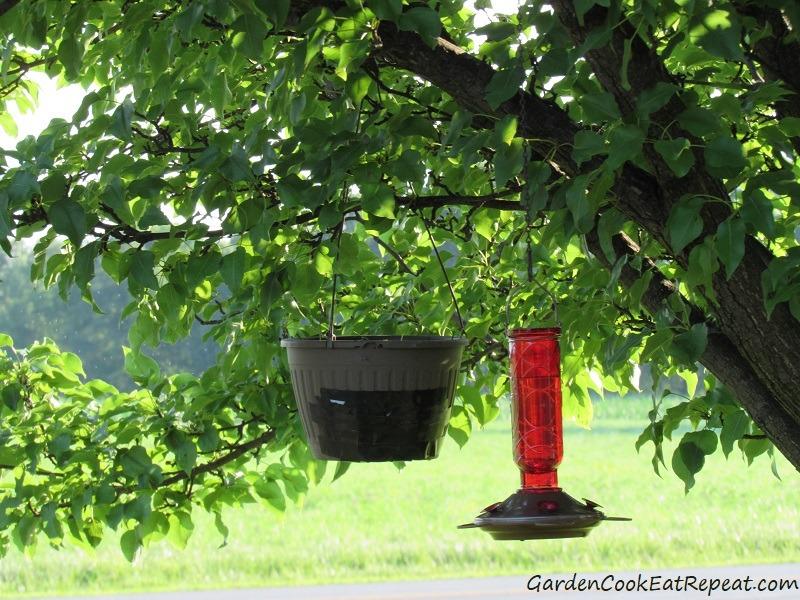 Hanging basket for rescued birds