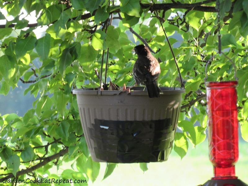 Mama bird found them