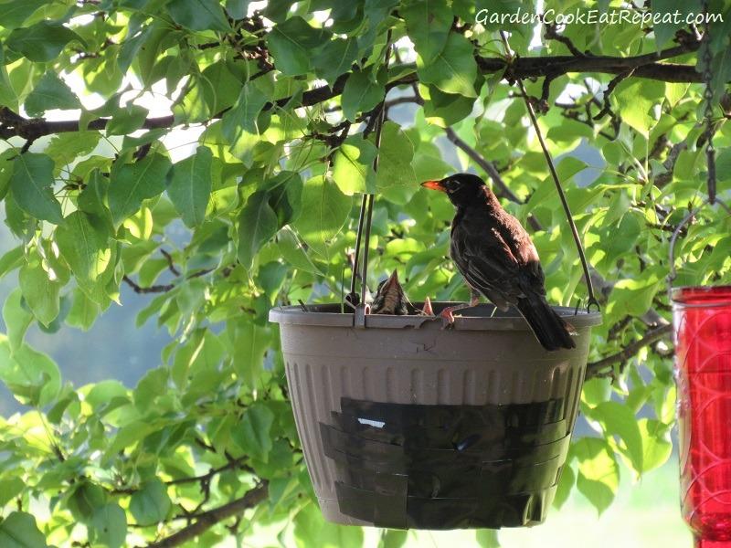 Mama bird was dedicated to feeding the babies