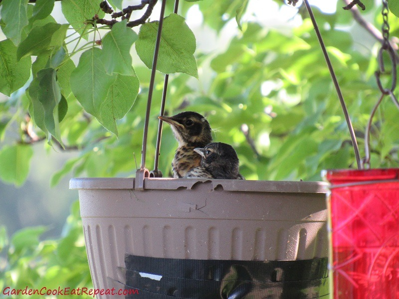 Birds contemplating flight