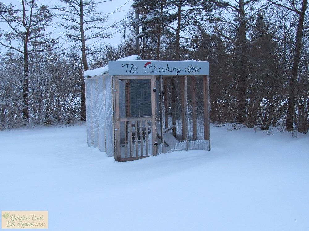 Coop in winter